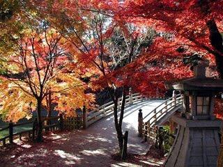 岡崎市東公園の紅葉(純系名古屋コーチン酔人観光情報)